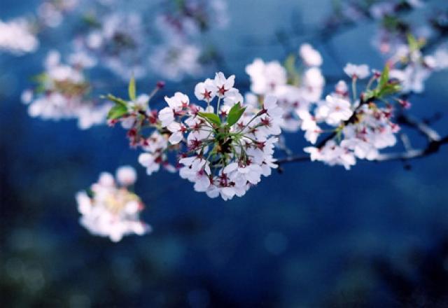 Học tiếng Nhật về chủ đề bốn mùa trong năm