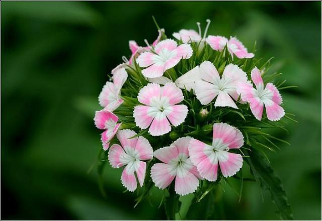 Từ vựng tiếng Nhật về các loài hoa